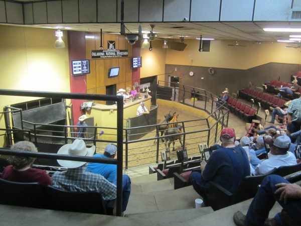 Stockyards City Cattle Auction