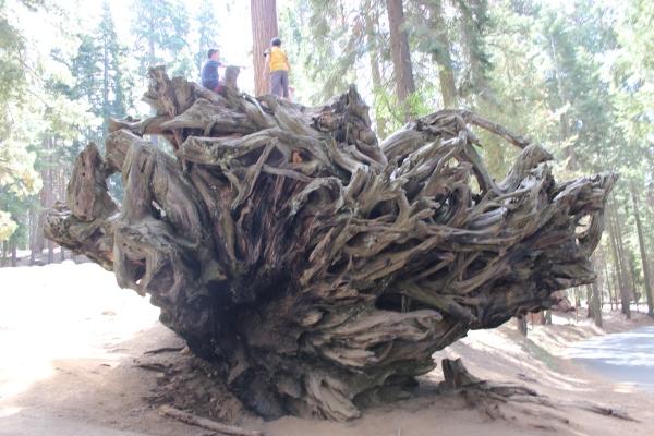Auto Tree